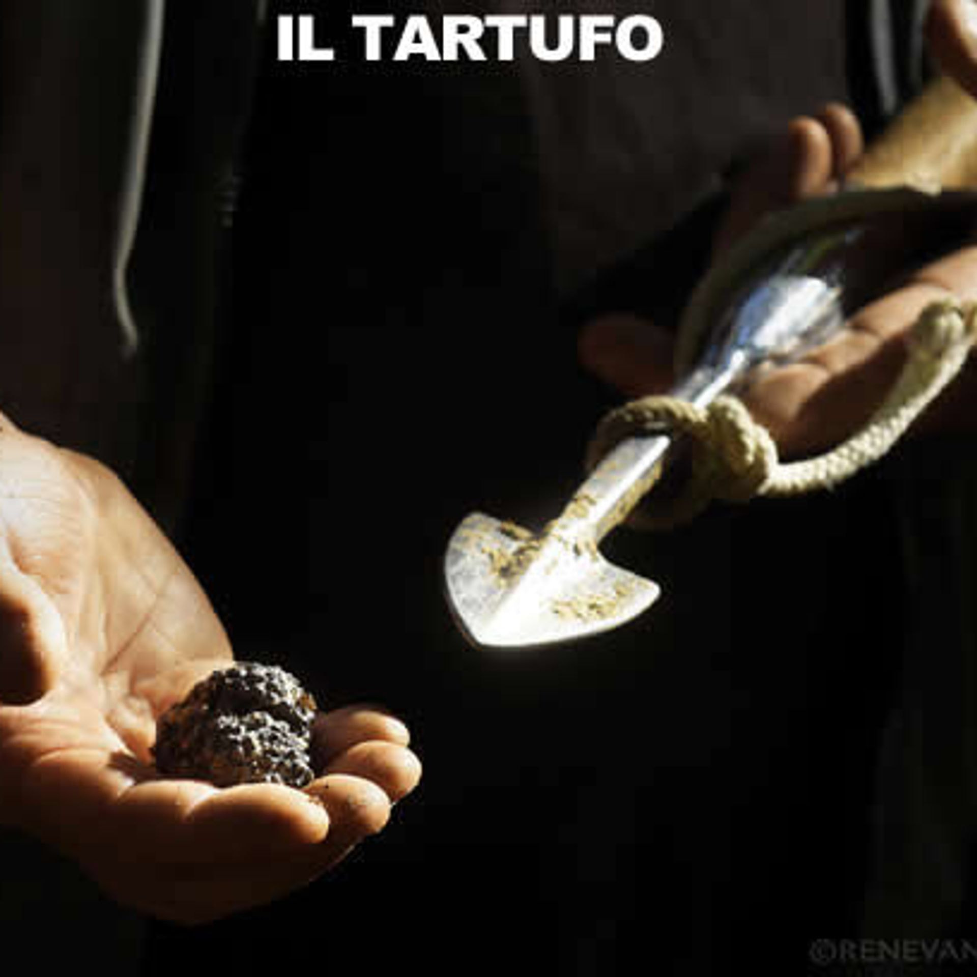 tartufo, tartufi, tartufo nero estivo, tartufo bianchetto