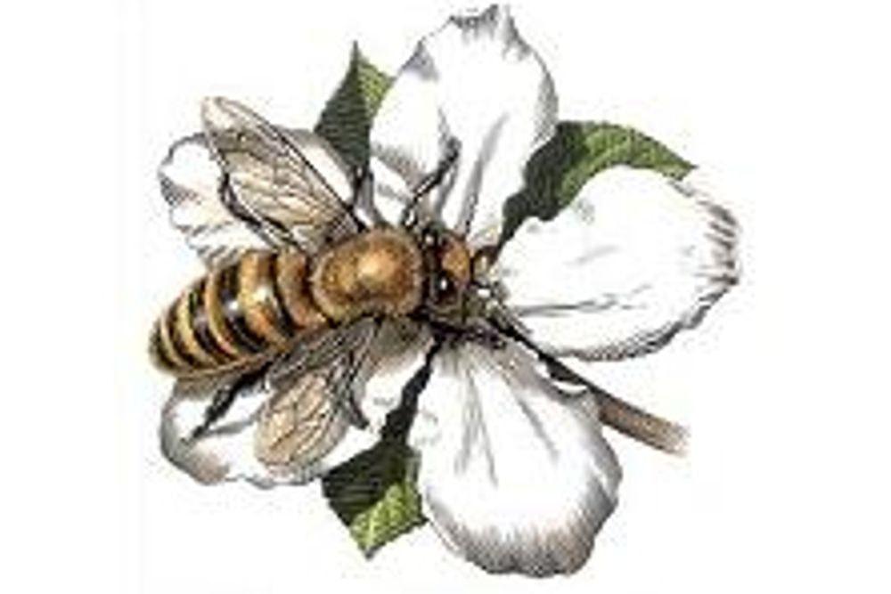 Bee Tea, 200g