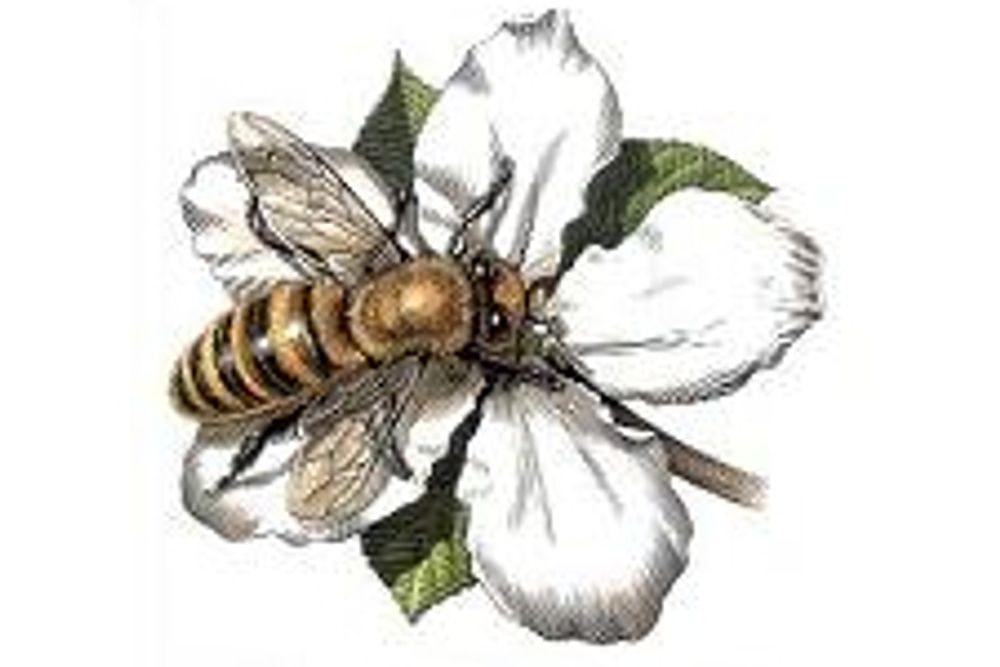 Bee Tea, 100g
