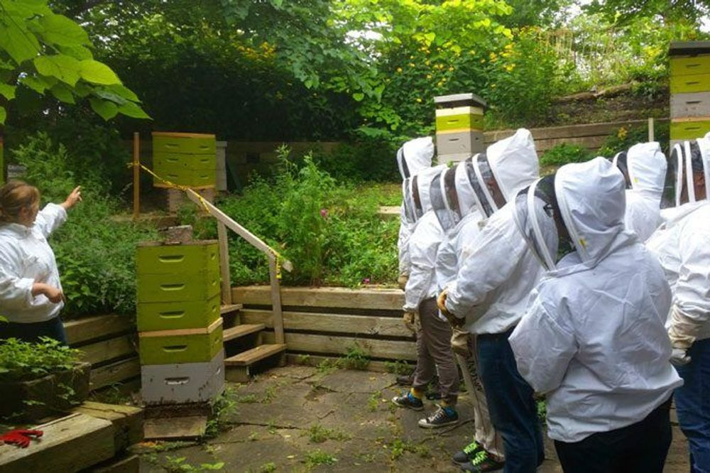 Workshop on Honeybees: Beginners Class, Beyond the Basics  - September 23, 2020 - 10am-4pm