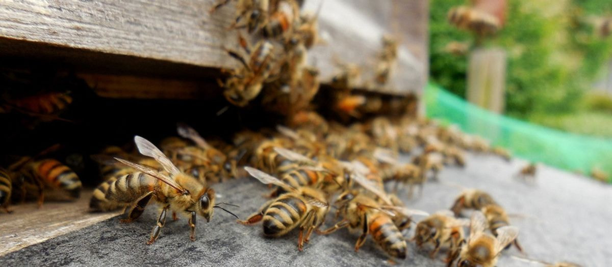 2019 Bees Now Available For Pre-order