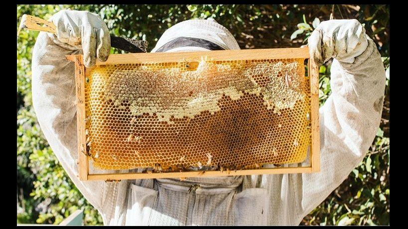 2019 Beekeeping Classes