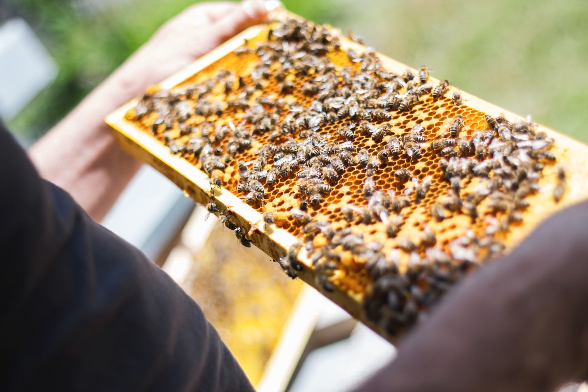 Introductory Beekeeping