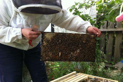 Introduction to Honeybees: Absolute Beginner Class